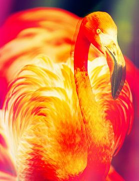 De Flamingo van Didden Art