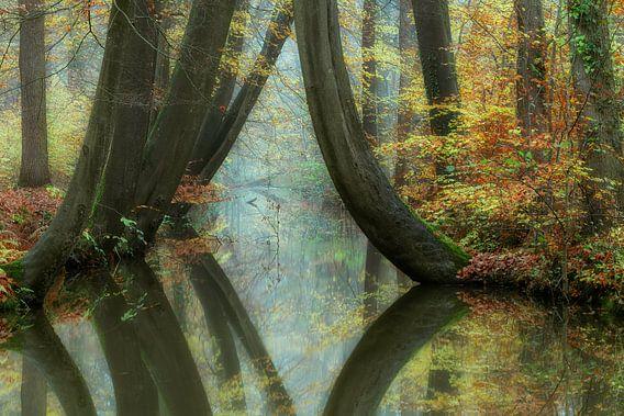 Herfstbos met beek en kromme beuken met reflectie