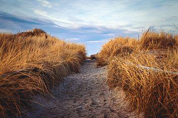 Nicht mehr weit und wir sind am Strand. von Florian Kunde