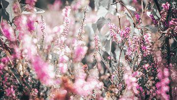 champ de fleurs sur Bjorn Brekelmans