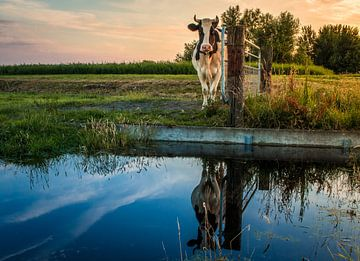 Starende koe sur Jo Pixel