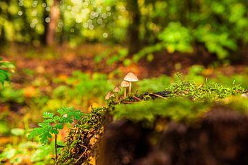 Paddestoelen op de bosgrond.