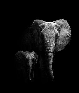 Mutter und Kind, WildPhotoArt