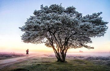 Krenteboom van TH Hoang