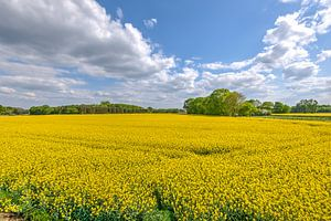 Veld met gele bloemetjes van