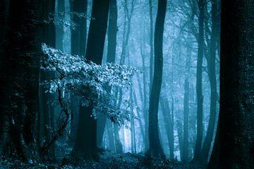 Mistig bos met herftsbladeren (blauwtinten)