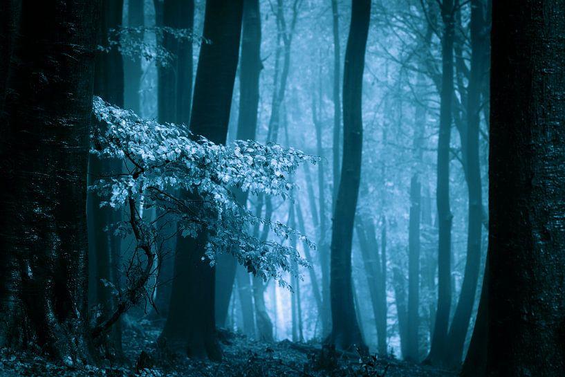 Mistig bos met herftsbladeren (blauwtinten) van Mark Scheper