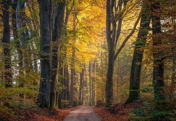 Pad door het bos van Mario Visser