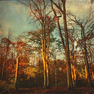 Bomen in het ochtendlicht