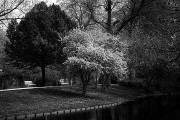 Rotterdam in Schwarz und Weiß von Prachtig Rotterdam
