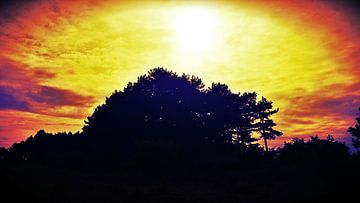 Zonsondergang in bos van Chantal Koper