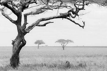 Luipaard in boom von Tom van de Water