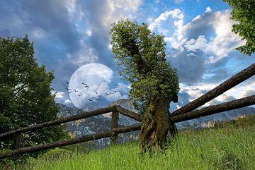 Baumgrenze von Norman Krauß