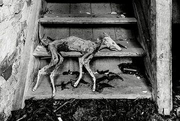 Mumifizierter Hund