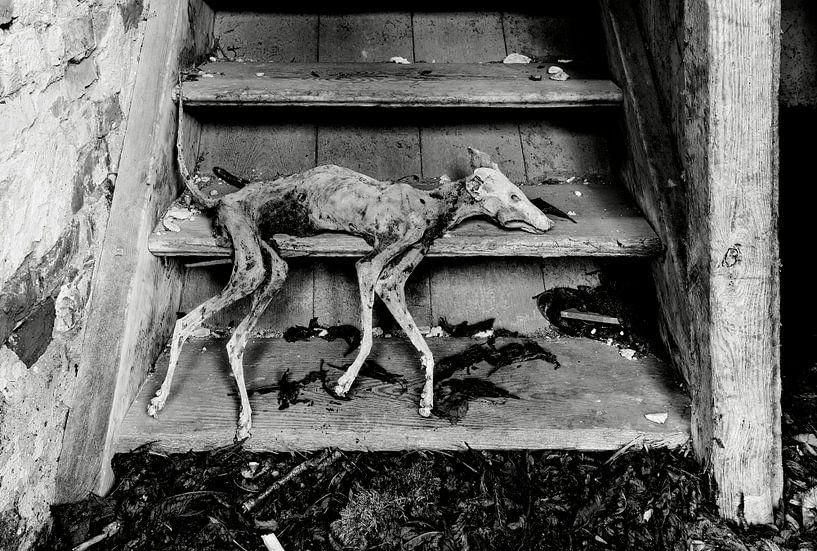 Gemummificeerde hond van Frank Herrmann