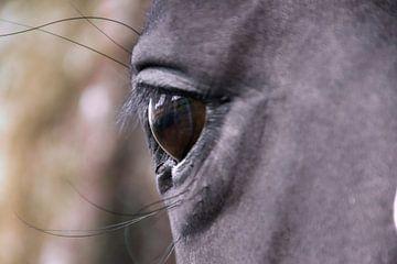 Auge um Auge von J..M de Jong-Jansen