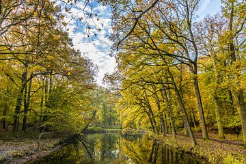 Volwassen bomen in bos langs vijver in herfstkleuren van Henk van den Brink