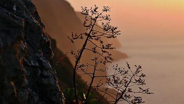 Schets van een verdorde plant in de ondergaande zon van Madeira van Timon Schneider