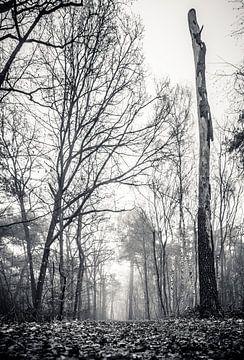 Dood hout (zwart-wit) van Fotografie Jeronimo