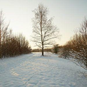 winter@zwevegem sur