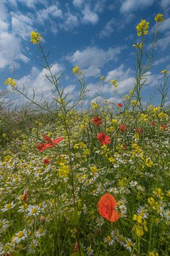 Veldbloemen van Moetwil en van Dijk - Fotografie