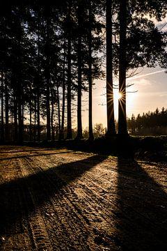 Hier kommt die Sonne von Ilona van Dijk