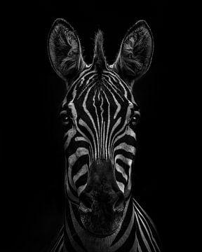 Zebra in einer schwarz-weißen Version von Mark Evenhuis