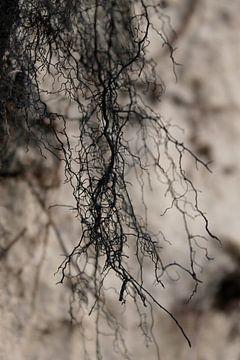 Natur abstrakte von geen poeha