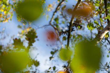 Herfstbomen von Tot Kijk Fotografie: natuur aan de muur