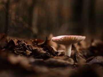 Mushroom von Lex Schulte