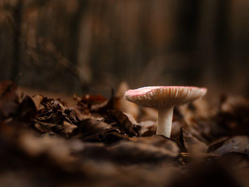 Mushroom van Lex Schulte