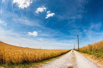 Einsame Straße durch Getreidefeldern von Günter Albers