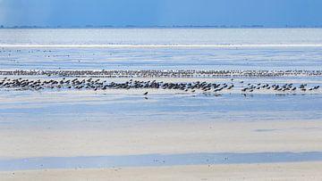 Blauwtinten en vogels - Natuurlijk Ameland van Anja Brouwer Fotografie