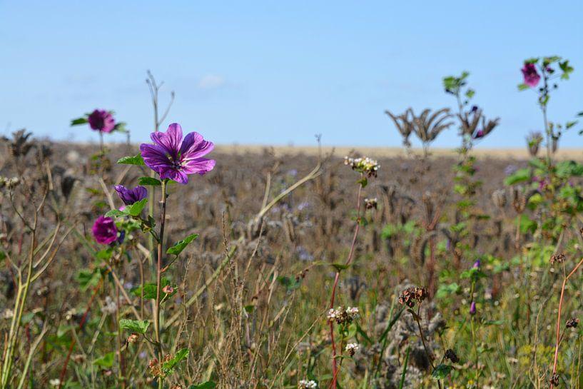 Tussen de gedroogde bloemen van FotoGraaG Hanneke