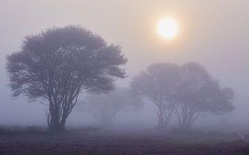 Johannisbeerbäume bei nebligem Sonnenaufgang