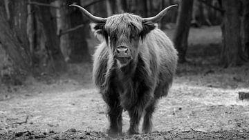 Rund in Zwart-wit von Randy van Domselaar