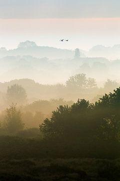 Schwäne über Dünen mit Nebel, vertikal von Menno van Duijn