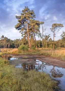 Rustige heide met een water pond_2 van Tony Vingerhoets
