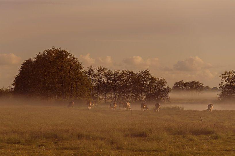 Early morning mist #2 von Anita Meis