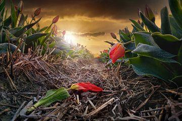 Holländische Tulpen im Frost von Chihong