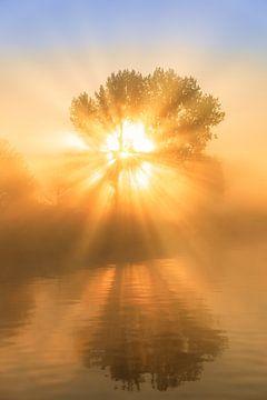Sonnenstrahlen beleuchten einen Baum während eines schönen Sonnenaufgangs im Nebel von Bas Meelker