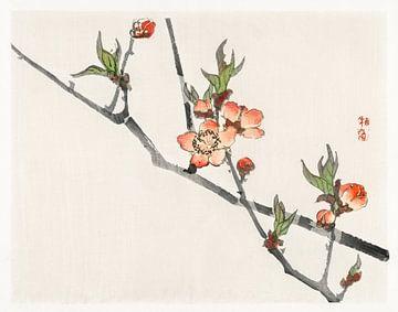 Pfirsichblüte von Kōno Bairei (1844-1895) von Studio POPPY
