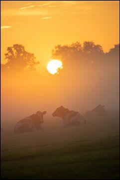 Dutch Cows van E.H. Efek