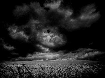 Cloudy sur Lex Schulte