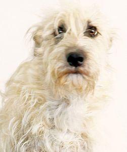Hondenportretje