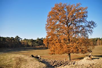 Herfstboom op de Zandvlakte... van DoDiLa Foto's