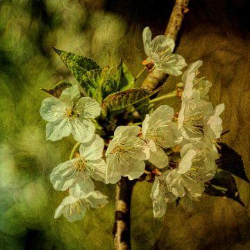 Blossom sur Yvonne Blokland