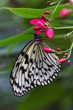 Schmetterling auf einer Blüte von Anja B. Schäfer