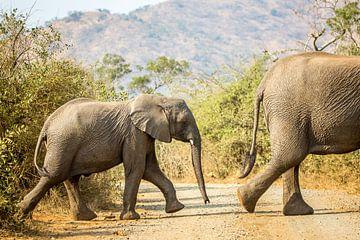 Elefant von Carlien schelhaas