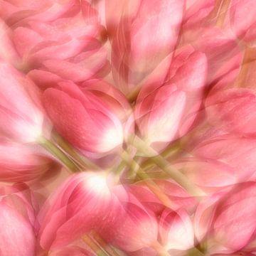 Tulpen von Claudia Moeckel